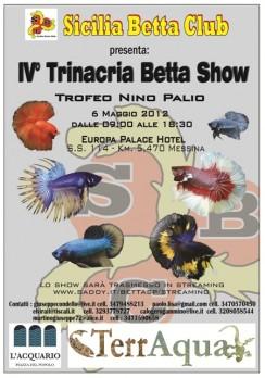 4 trinacria betta show