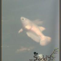 Saddy00012