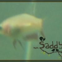 Saddy00015